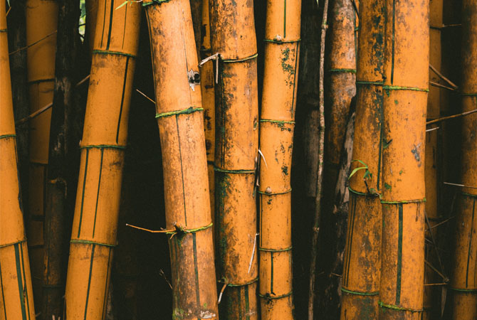 Bumil Wajib Tahu! Ini 9 Manfaat Serat Bambu Bagi Kesehatan