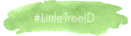 Little Tree Indonesia Brush Stroke Picture